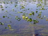 Horshoe Lake, Idaho