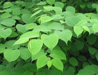 Vivid Green (Detail)