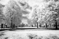 Spring in infrared light
