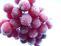 Berries in frost
