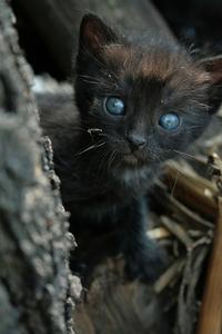 black kitty 2