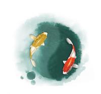 taichi fish