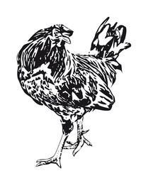 clip art chicken 1