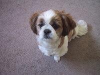 my dog DB