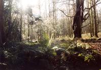 Massey Forest