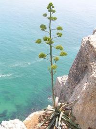 plant sea