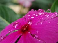 water drops on flower
