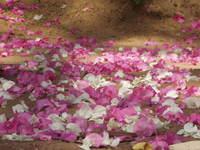 petals floor