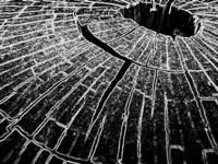 Dead-wood tree 19