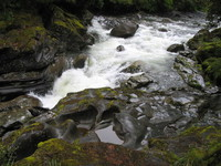 Forest Stream and Fauna