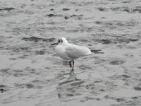A sea gull