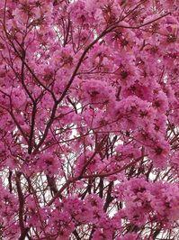 Arbol de mi tierra 2 (Tree of