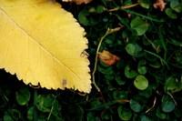 leaf under foots