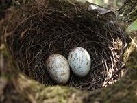 Two little eggs