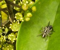 Spider versus fly