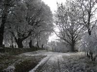 winter in Neugarten 4