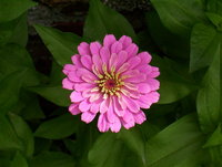 Flowers at my garden 2