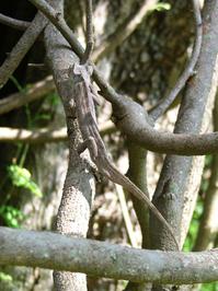 hidden chameleon