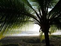 Palm & Beach