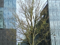 Nature Building