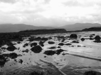 Seaweed Islands 1