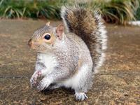 squirrel_0 2
