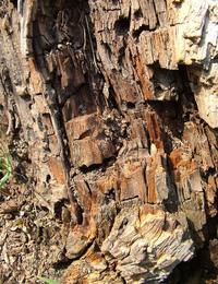 macro bark 2
