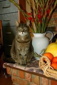 Cat Still Life