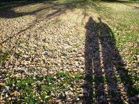 Shadows and Light 4