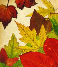 Leaf Collage 11