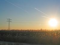 Reed - Cane Sunrise 1