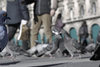 Milano piazza Duomo 2