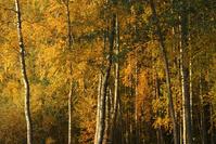 Finland Fall 001