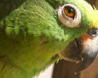 Wet Parrot
