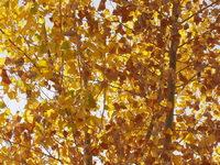 Autumn Leaves Series 3