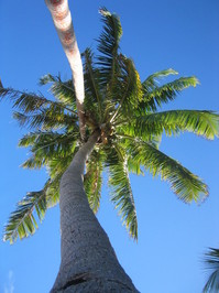 Hugging palm trees