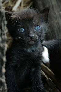 black kitty 1