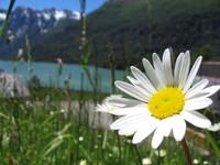 Bariloche -flor
