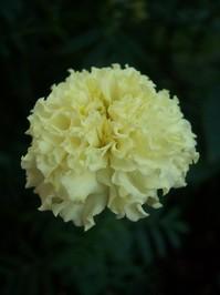 Flowers of Villa 03