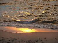 golden seashore 2