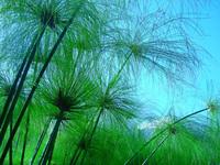 Green plants 2