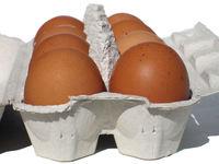 eggs carton 2
