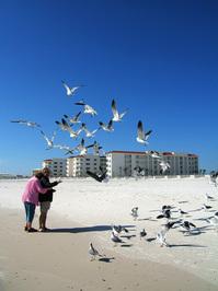 Seagulls 9