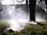 Burning trees 2