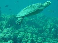 maldive 6