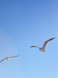 White Gulls