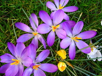 Spring Garden 5