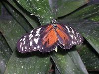 Butterfly Conservatory 4