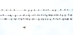 birds phone