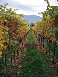 wineshire
